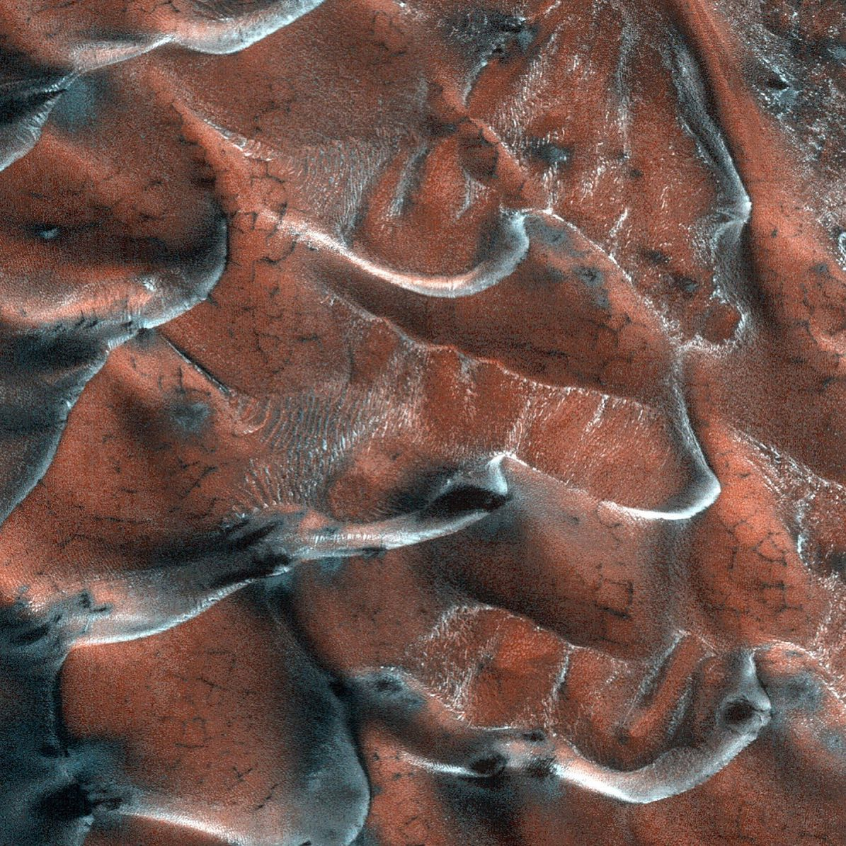 the red planet. a field of sand dunes occupies this frosty 5-kilometer diameter crater in the high-latitudes of the northern plains of mars. some dunes have separated from the main field and appear to be climbing up the crater slope along a gully-like form.Image Credit: NASA/JPL-Caltech/University of Arizona#theredplanet #mars #sanddunes #lifeonmars